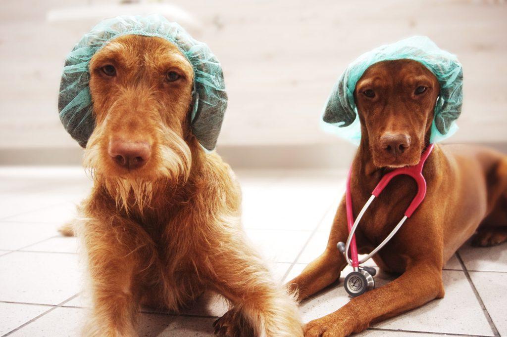 Feny und Lany sind die beiden Praxishunde der Tierarztpraxis Bendlin in der Rostocker KTV
